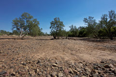 Drought in the Outback Royalty Free Stock Photos