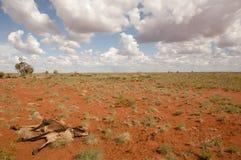 Drought - Outback Australia Stock Photo