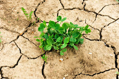 Drought plant Stock Photography