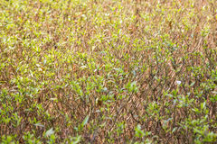 Drought Plant background Royalty Free Stock Images