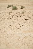 Drought and plants Stock Images