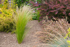 Drought resistant plants and grasses Stock Images