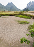 Drought in the Rice Farms. The dried waterways amidst the rice farms of Guilin, China Royalty Free Stock Photos