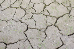 Drought in rice Royalty Free Stock Image