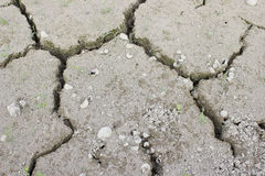 Drought in rice Royalty Free Stock Images