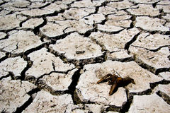 Drought - river dried up with died crab- Global warming Stock Photography