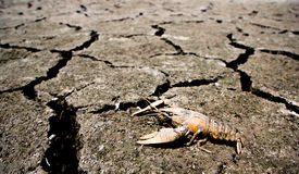 Drought - river dried up with died crab- Global warming Stock Images