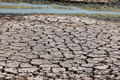 Drought. Season in National park Serengeti. Tanzania. Africa royalty free stock photo