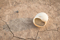 Drought,shell Stock Photography