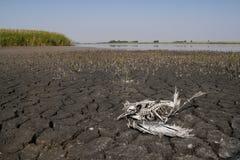 Drought on Slano kopovo in Serbia Stock Photo