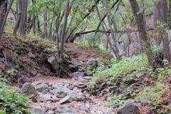 Drought  stream Nojoqui Falls Park California Royalty Free Stock Photos