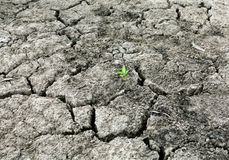 Drought Stricken Landscape. Drought Strcken land with a plant Stock Image