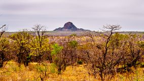 The drought stricken savanna area of northern Kruger National Park. In South Africa royalty free stock photo