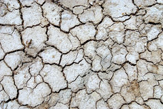 Drought 1 Stock Photography