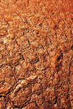 Drought texture Stock Photography