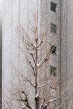 Drought Tree in Winter with Building in Background. Drought Tree in Winter with Office Building in Background stock photography