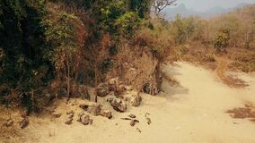 Drought triggered by climate change. Deforestation of rainforest in Asia. Aerial video 4k.