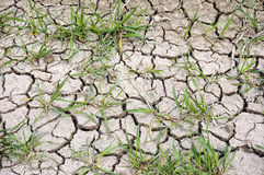 Drought  wheat field Royalty Free Stock Images