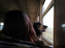 Dog in the train. Drove in Sevastopol, and captured this moment, which as on me by the royalty free stock photos