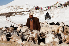 Drover with goats over snow, India. ROHTANG LA, INDIA - JUNE 09: Drower with goats over snow poses for a photo on the road to Leh on June 09, 2012 at the Rohtang Stock Photo
