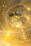 Drown wasp in a wine Stock Photography