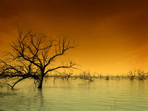 Drowned. Forest in Menindee Lake, Australia royalty free stock image