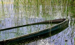 Drowned boat. Surrounded by green aquatic plants Stock Photography