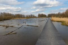 Drowned forest in the Netherlands. This forest has been drowned to serve as water retention area. A beautiful relaxing place in nature Stock Photos