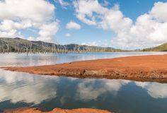 Drowned forest at Yate Lake in Blue River National Park, New Caledonia. Drowned forest at Yate Lake in Blue River National Park in New Caledonia royalty free stock photography