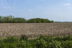 Drowned Land of Saeftinghe. Farmland at Drowned Land of Saeftinghe royalty free stock photos