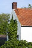 Drowned Land of Saeftinghe. Ivy growing on facade of house at Drowned Land of Saeftinghe stock photography