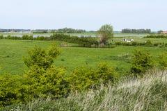 Drowned Land of Saeftinghe. Landscape at Drowned Land of Saeftinghe royalty free stock photo
