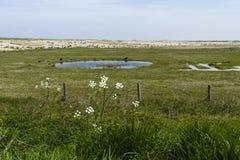 Drowned Land of Saeftinghe. Landscape at Drowned Land of Saeftinghe stock photography