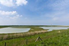 Drowned Land of Saeftinghe. Landscape at Drowned Land of Saeftinghe stock images