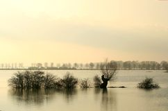 Drowned trees in dutch fore-lands. After long raining the water level of the river IJssel in the Netherlands is very high resulting in flooded fore-lands and stock images