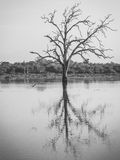Drowned trees in the reservoir at Udawalawe national park, Sri L Stock Photo