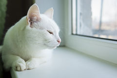 Drowsy cat on windowsill Stock Images