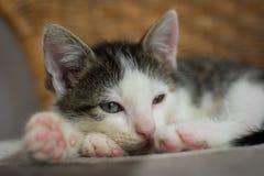 Drowsy kitten on wicker chair. Stock Image