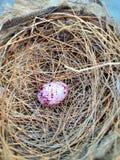 Drozda słowika jajko zdjęcie stock