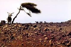Dürre und Trockenheit Stockfoto