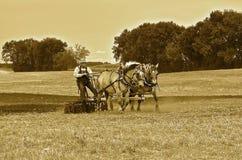 Drużyna konie ciągnie dyska (sepiowego) Zdjęcia Royalty Free