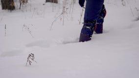 Drużyna wycieczkowicze w zima lesie z narciarskimi słupami, ciężka chodzić przez gęstego śniegu zdjęcie wideo