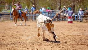 Drużynowy Łydkowy Roping kowbojami Przy kraju rodeo obraz stock