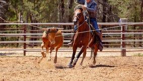 Drużynowy Łydkowy Roping kowbojami Przy kraju rodeo zdjęcie royalty free