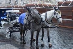 Drużyna dwa konia na starym rynku w Praga Zdjęcia Royalty Free