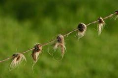 Druciany ogrodzenie z końskim włosy w barbetach Zdjęcia Royalty Free