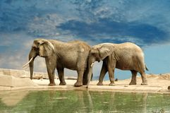 Druck des Elefanten Lizenzfreie Stockfotos