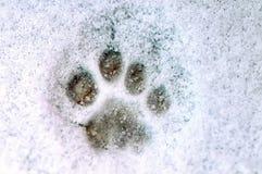 Druck einer Tatze einer Katze auf weißem Schnee Stockfotografie