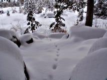 Drucke in einer Winterlandschaft Lizenzfreie Stockbilder