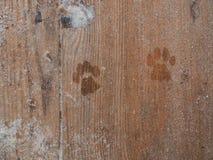 Drucke von Katzentatzen Lizenzfreie Stockfotografie